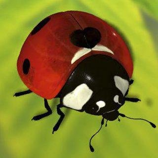 Ribena_Ladybird